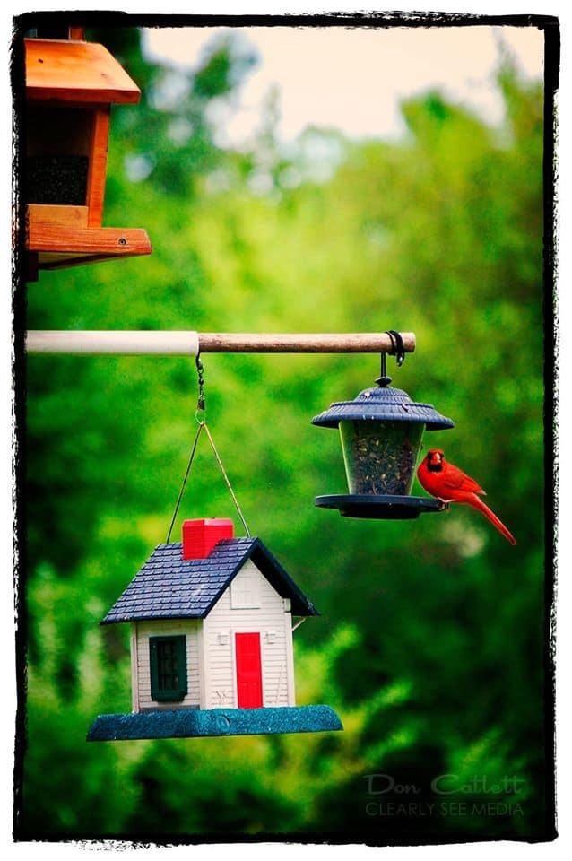Cardinal-Feeder
