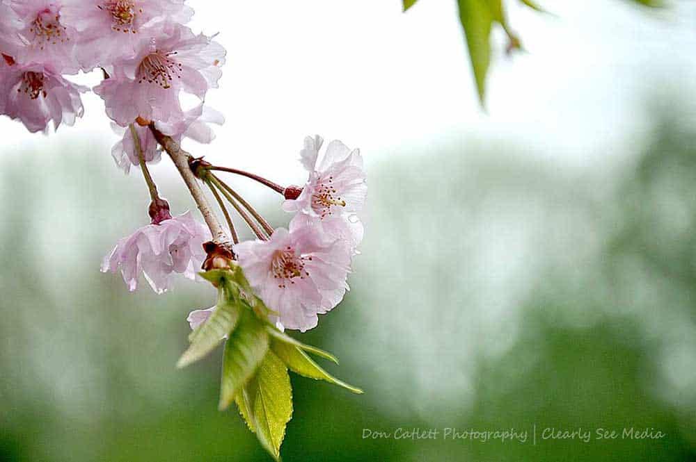 Floral-01-CLSEE