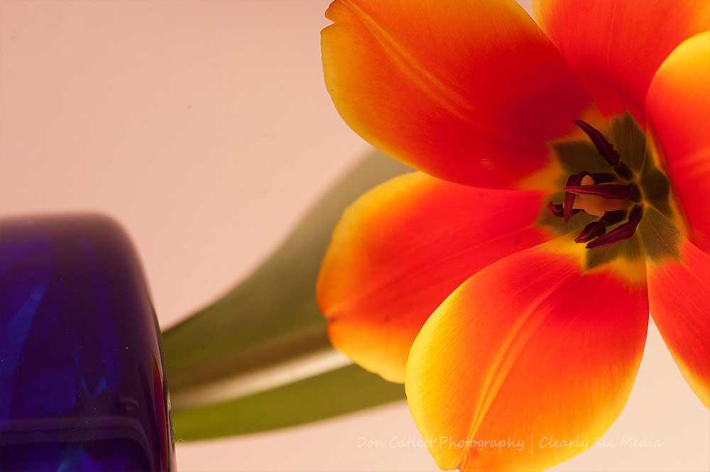 Floral-02-CLSEE