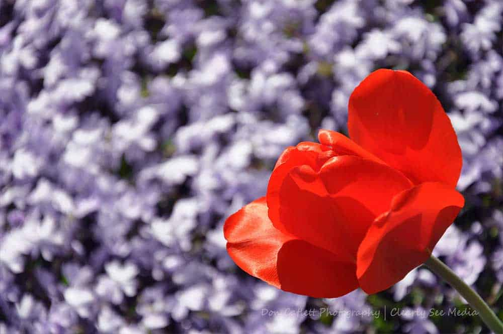 Floral-03-CLSEE