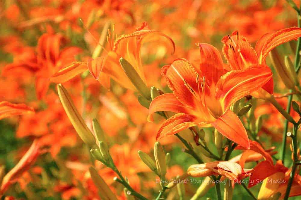 Floral-04-CLSEE