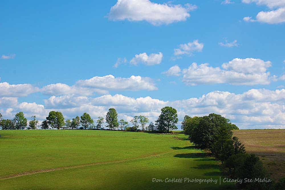 Green-Fields-CLSEE
