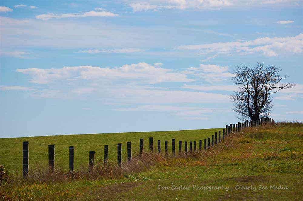 Lone-Tree-CLSEE