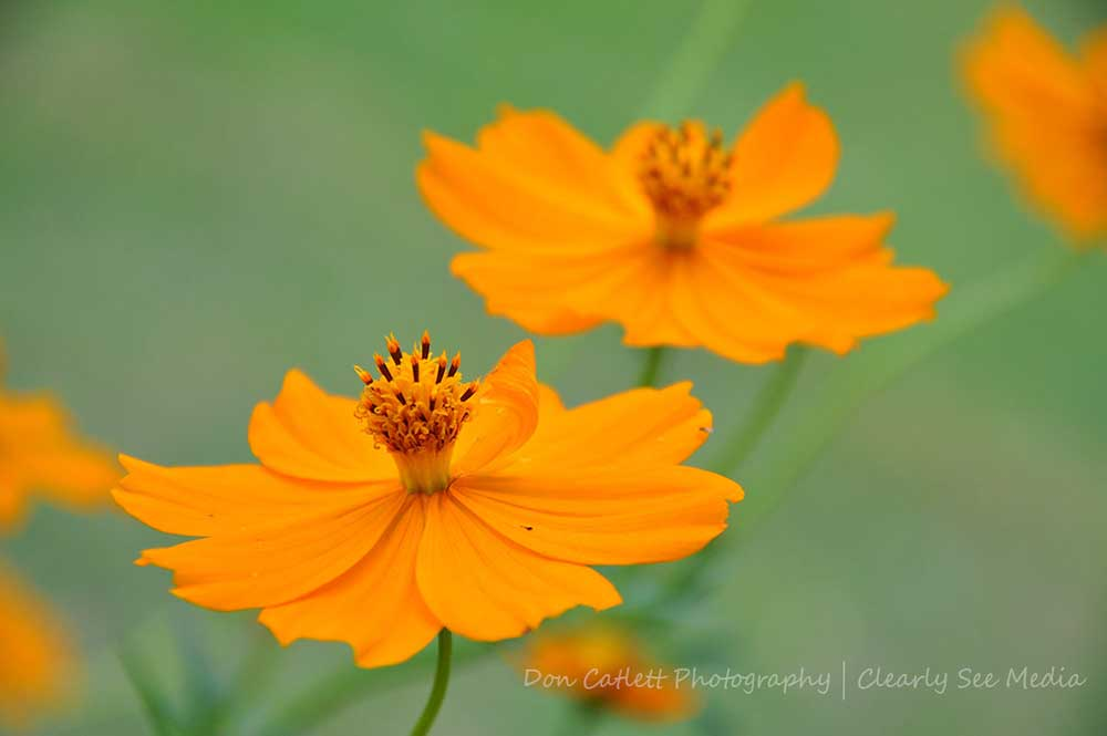 Orange-Flowers-CLSEE