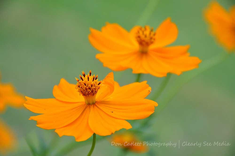 Orange-Flowers-CLSEE