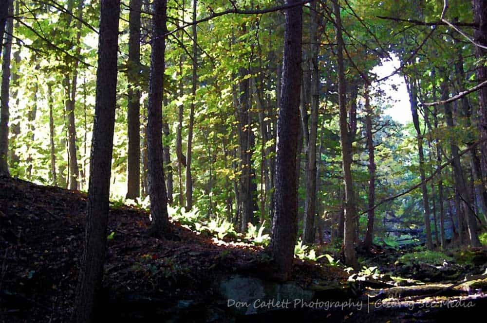 Painted-Forest-CLSEE