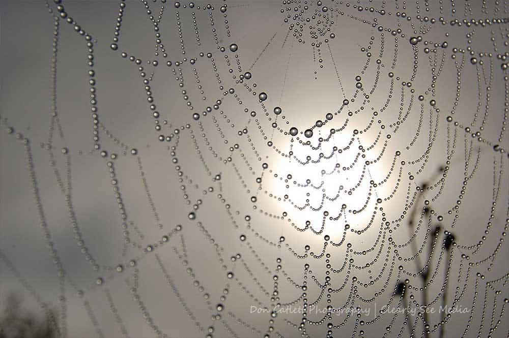 SpiderWeb-CLSEE