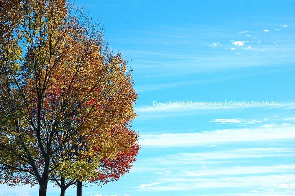 Trees-Blue-Sky-CLSEE