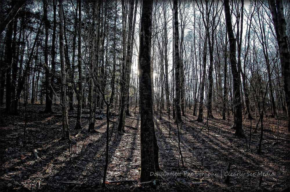 Walk-Woods-CLSEE