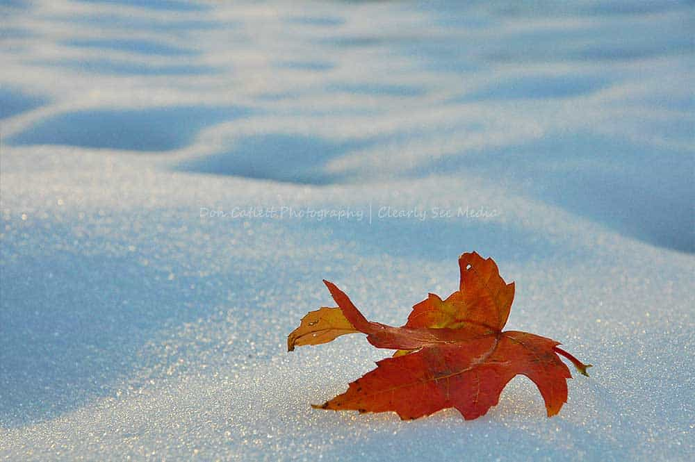 Winter-Leaf-CLSEE